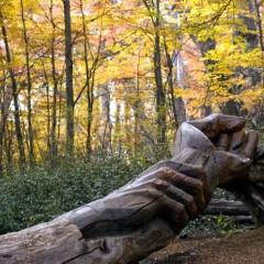 Bosque tallado - El Bolsón